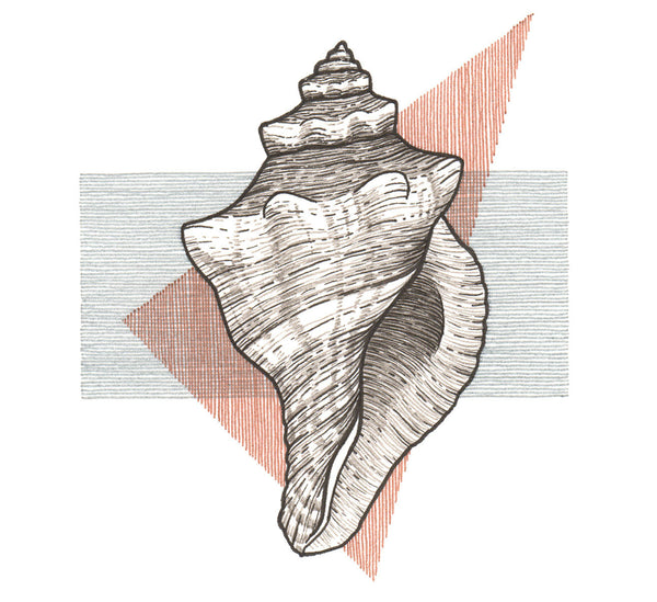 Conch Shell Framed Original Drawing