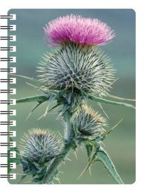 Thistle 3D Notebook