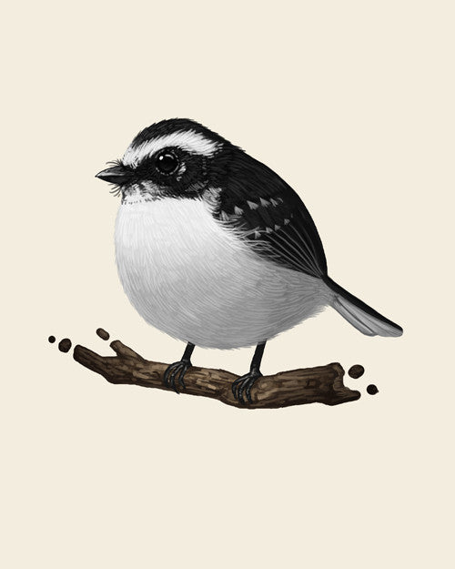 "Mike Mitchell - ""White Browed Fantail (Fat Birds)"" - Spoke Art"