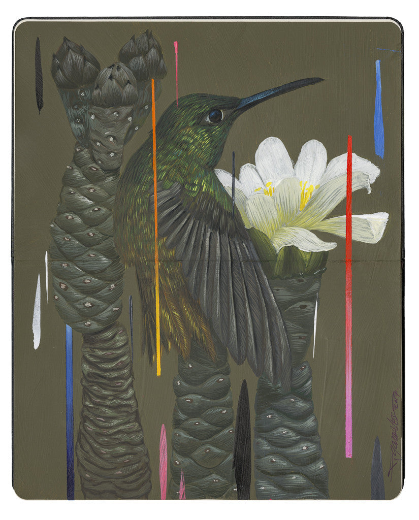 "Frank Gonzales - ""Buff Bellied Hummingbird and Pine Cone Chollas"""