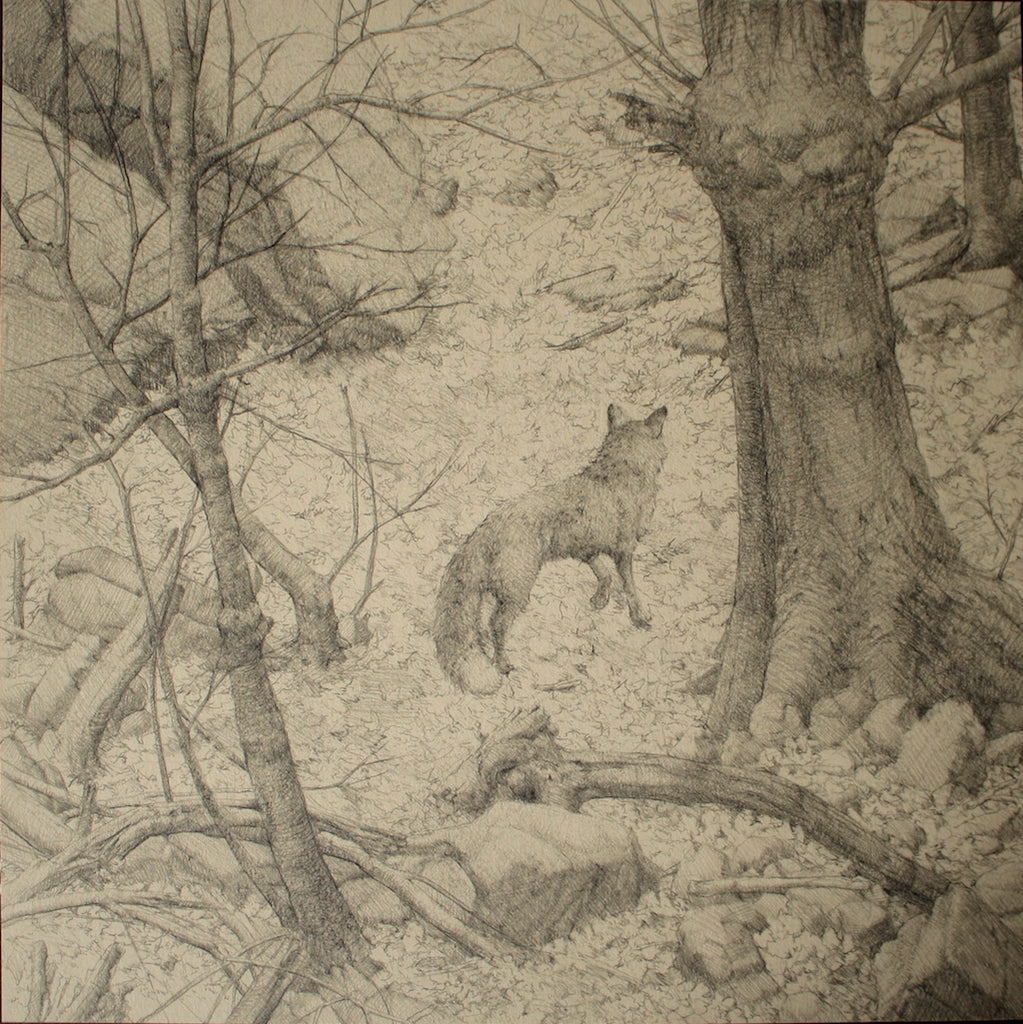 "Zachary Lank ""Fox In Woods"""