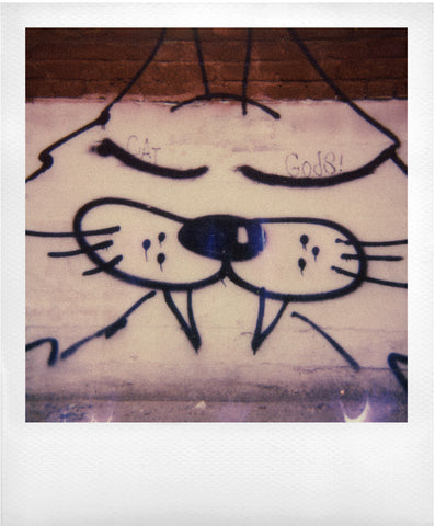 Cat Gods on Polaroid: Dirk Mai Photographer.