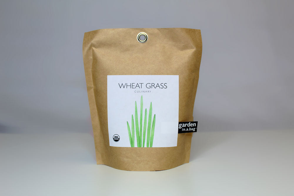 Wheat Grass Garden in a Bag