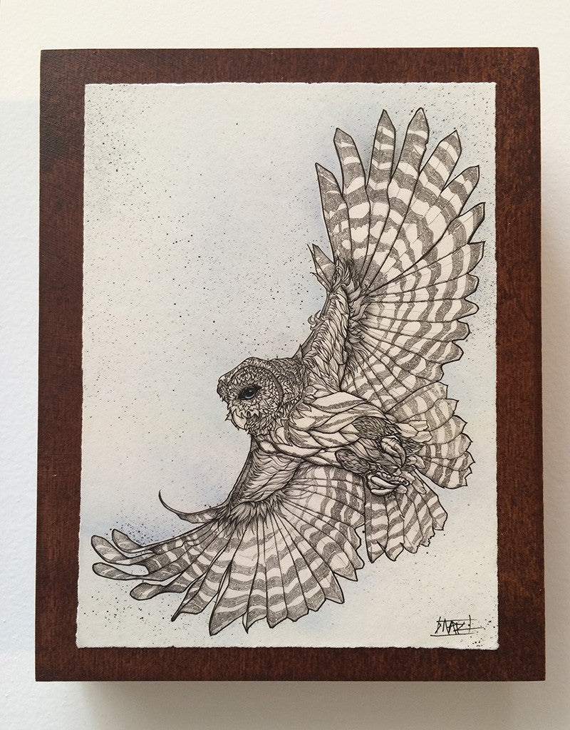 Barred Owl on Walnut Panel