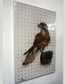 Falcon Canvas Giclèe