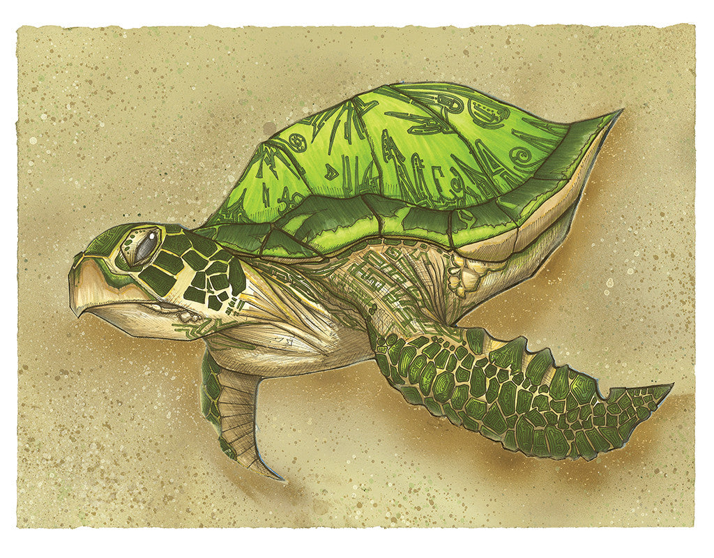 Sea Turtle ©2012 Michael Rohner