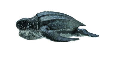 CollectA - Leatherback Sea Turtle