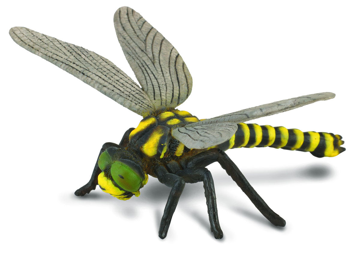 CollectA - Golden Ringed Dragonfly