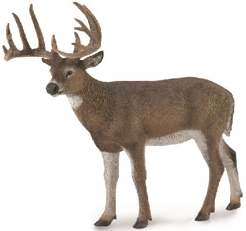 CollectA - White Tailed Deer