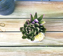 Load image into Gallery viewer, Green Succulent in Pink Ceramic Pot