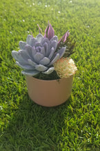 Load image into Gallery viewer, Mint Succulent in Pink Pot