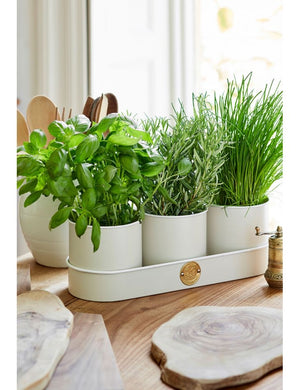 Sophie Conran Herb Pots - Buttermilk - The Cottage Gardener