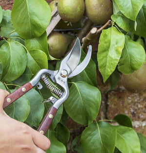 National Trust Secateurs - The Cottage Gardener