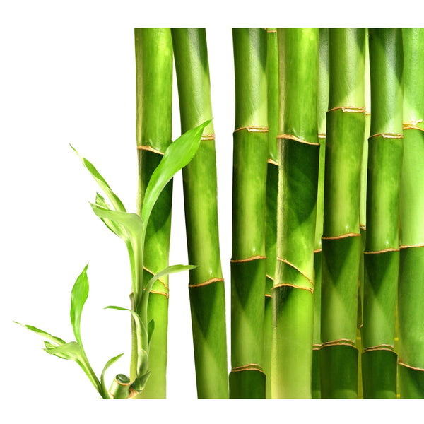 Bamboo Seeds Develop