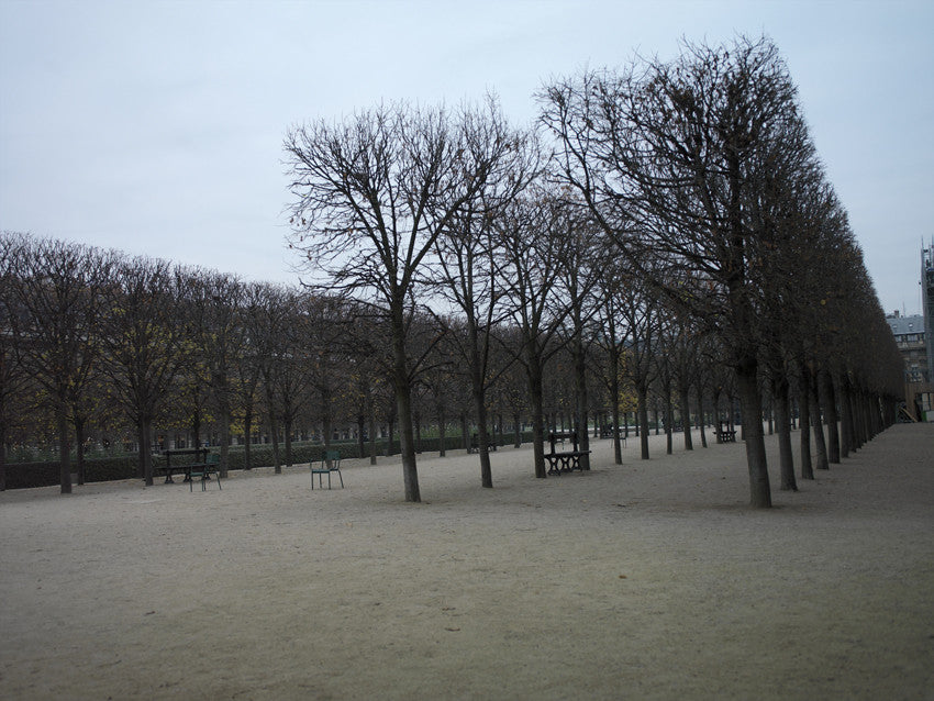 Paris. Tuileries Garden - Landscape Photography Print