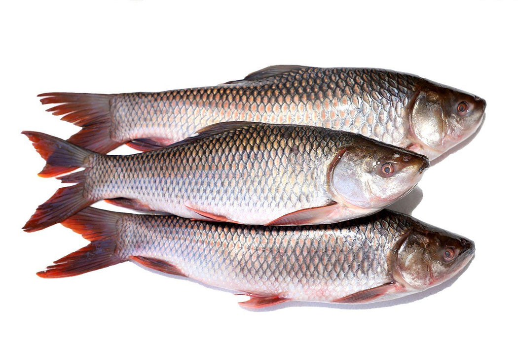 Whole Rohu Fish 8lbs - WeGotMeat- Columbus Ohio Halal Meat Delivery