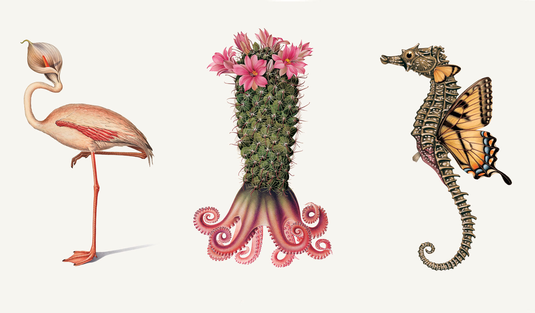 Effectivae Managerum (flamingo), Maximus Designex (cactus), and Innovato Ideatis (seahorse)