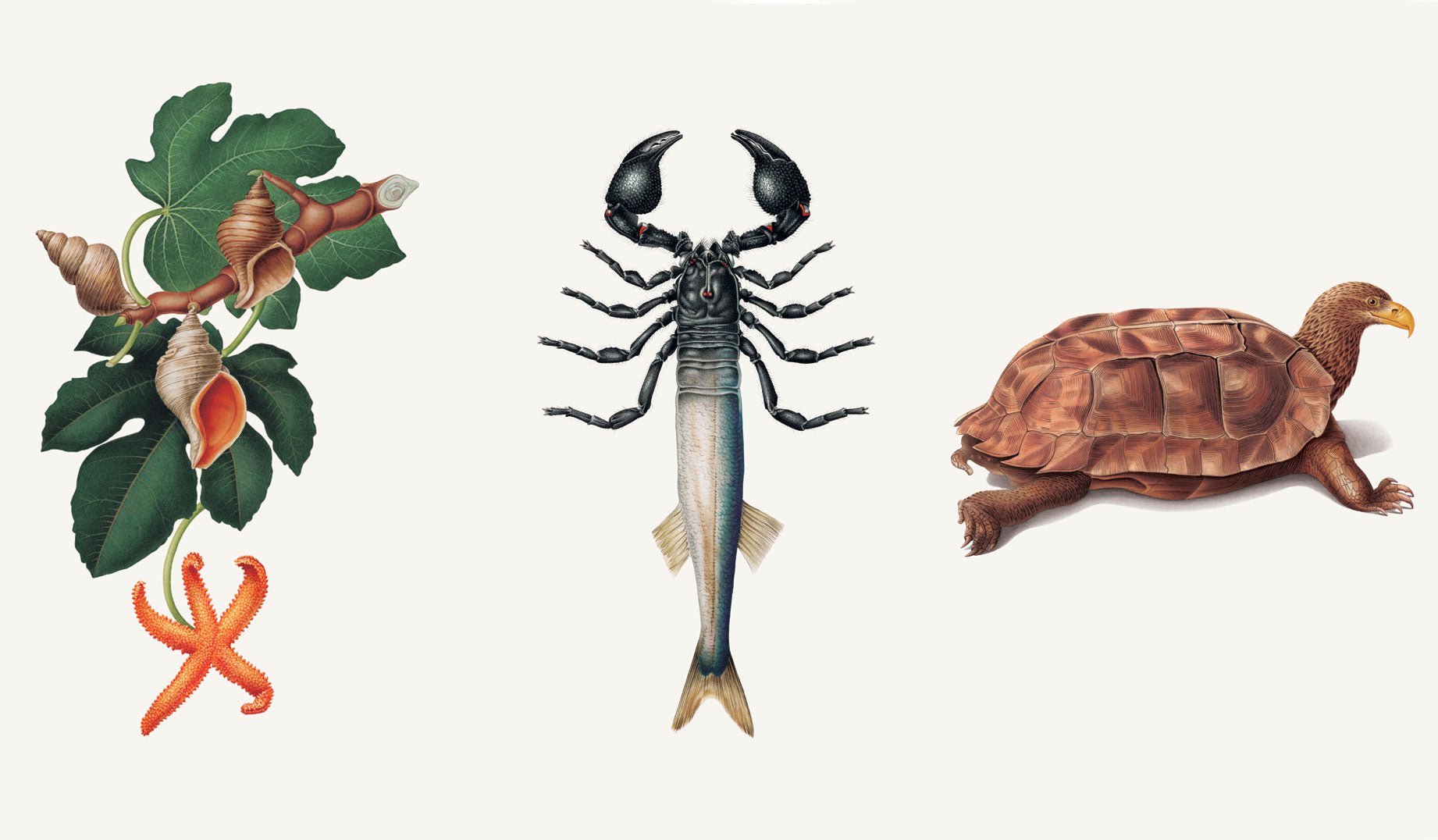 Communicatorum Claritus (starfish), Versatilum Adaptae (fish), and Purposo Careerus (turtle)