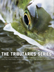 The Tributaries Series DVD