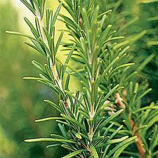 Rosemary And Juniper Fragrance Oil