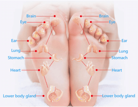 How Does Magnetic Acupressure Reflexology Gel Insoles Works