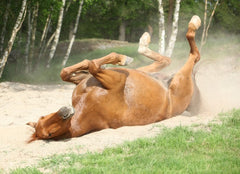 Equine Colic: Nutrition Part 2