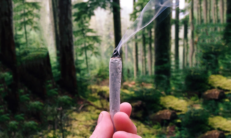 A guide to Cannabis and Camping,