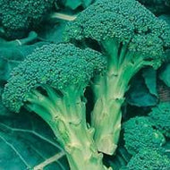 Broccoli Green Calabrese
