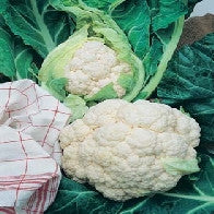 Cauliflower All The Year Round_image