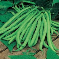 Bean, Climbing Blue Lake seeds