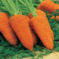 Carrot Chanteney Red Cored 2_image