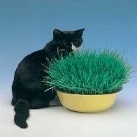 Cat Grass_image