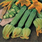 Courgette Romanesco AGM_image