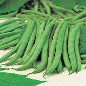 Bean, Dwarf Tendergreen seeds