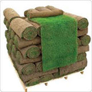 50 Square Metres of All-Purpose Lawn Turf_image