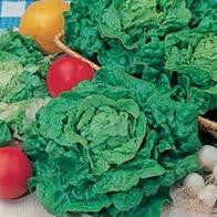 Lettuce Tom Thumb_image