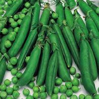 Peas Meteor (round-seeded variety) seeds