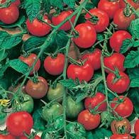 Tomato Gardener's Delight AGM (Large Cherry) seeds