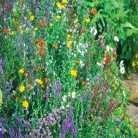 Wildflower Wildlife Mixture_image