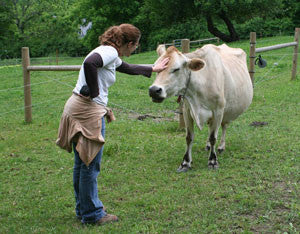 Young woman, petting a large Jersey Cow on the forehead.