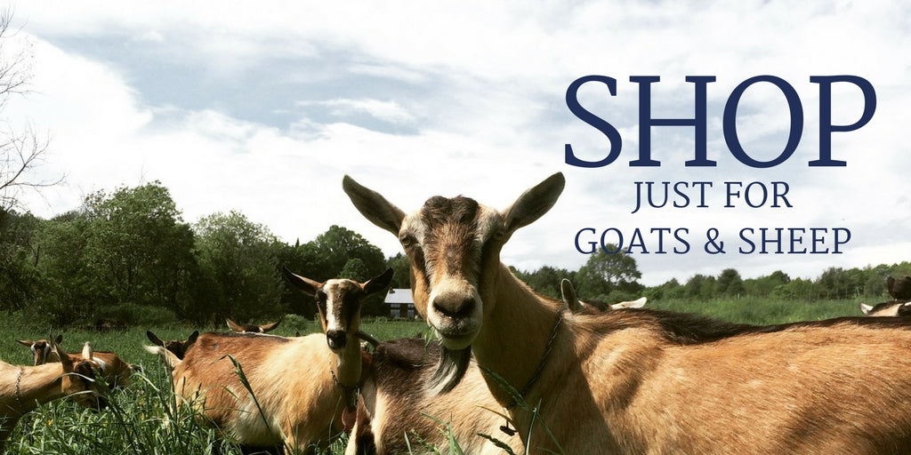 Shop Just for Goats & Sheep. A big brown goat standing in green grass with a cloudy blue sky behind her