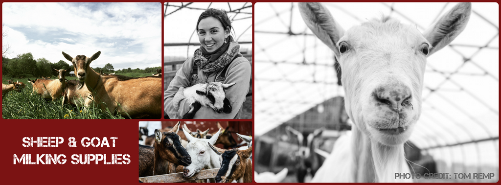 Bob White Systems - Sheep and Goat Milking Supplies - Milk Goat - Milk Sheep - Hand Milking - Homestead Dairy