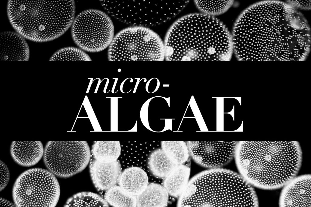 Microalgae: A Must-have Ingredient