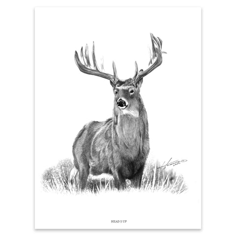 """HEADS UP"" WHITETAIL PRINT"
