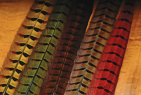 Hareline Ringneck Pheasant Tail Feathers
