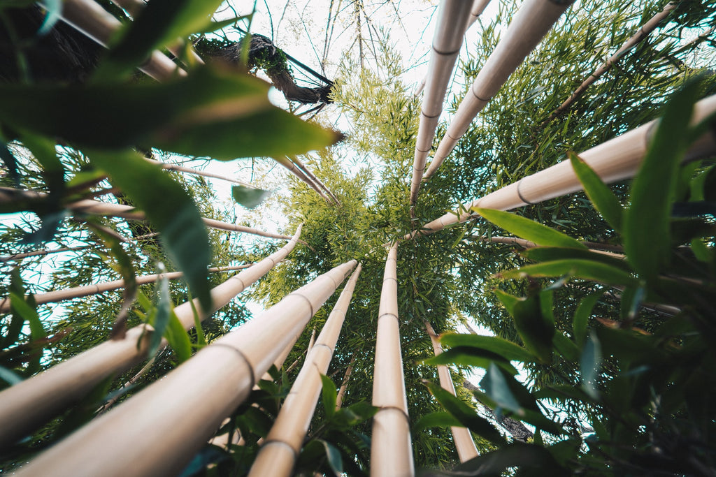 a sustainable bamboo forest