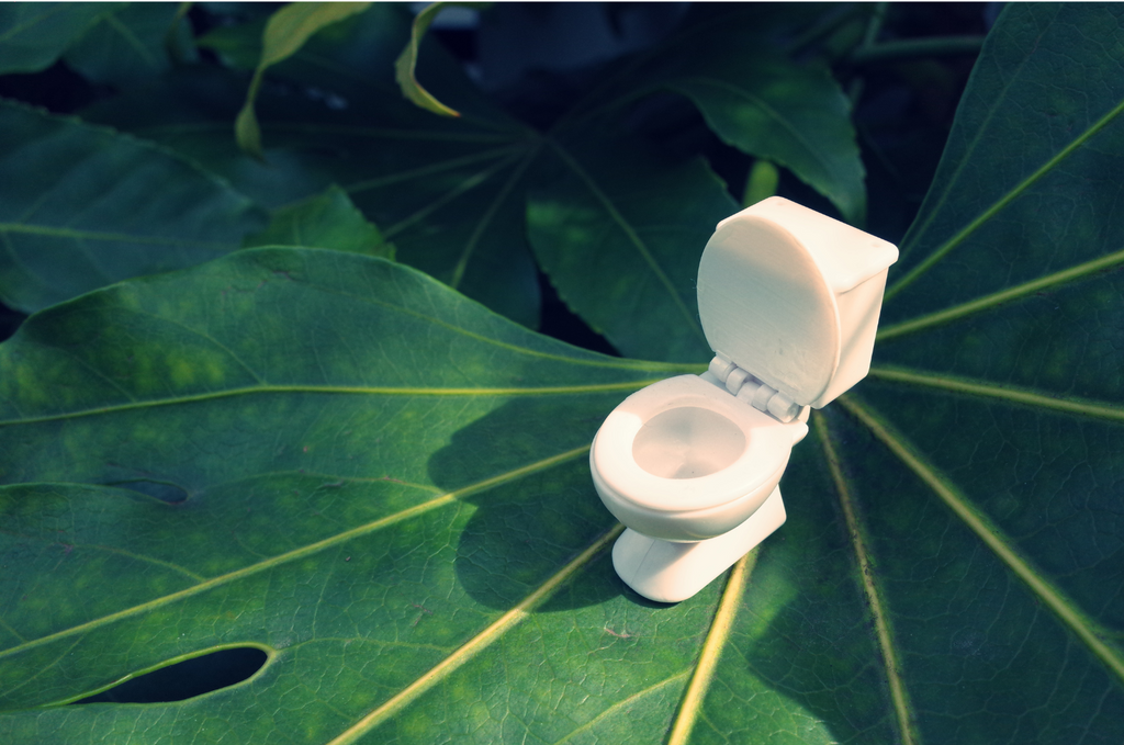 biodegradable toilet paper