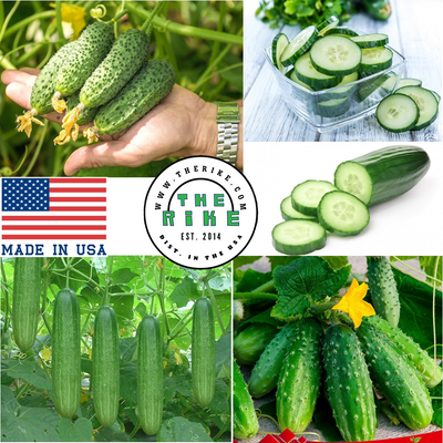 3 Varieties Spacemaster Cucumber Organic Vegetable Seeds FREE SHIP DOMESTIC USA