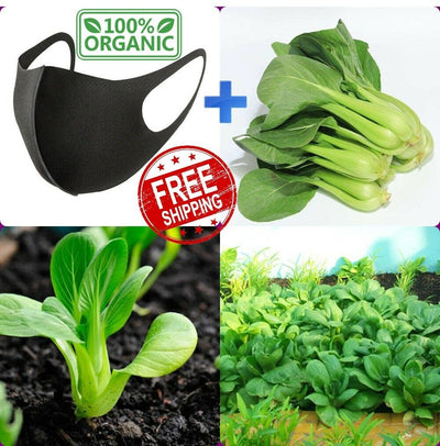 300 Seeds Bok Choy Brassica Rapa Subsp Pak Choi Chinese Cabbage FREE SHIPPING + GIFT