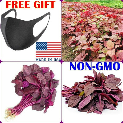300 Red Amaranth Seeds FREE SHIPPING+ GIFT
